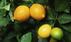 Gardens: Citrus