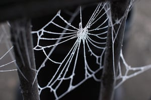 UK weather: A spider's web is covered in frost in sub-zero temperatures in Huntingdon