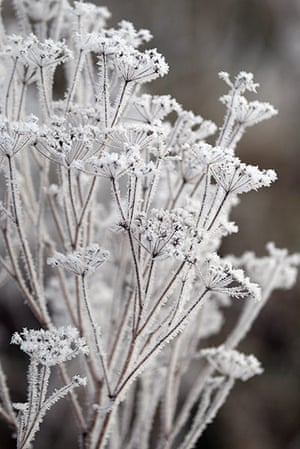 UK weather: Plants are covered in frost in Earith