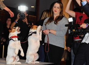 """Golden Collar awards: Uggie from movie """"The Artist"""" and his understudy"""
