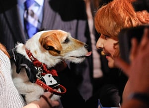 """Golden Collar awards: Uggie from """"The Artist"""" gives reporter kiss"""
