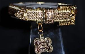 Golden Collar awards: Collar