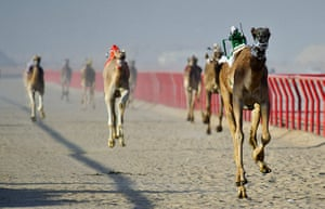 24 hours: Kebd, Kuwait: Camels ridden by mechanical robots race