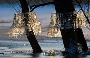 24 hours: Schwedt, Germany: Ice formations on trees at Unteres Odertal national park