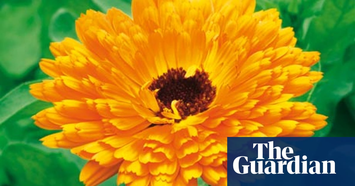 Alys Fowler Marigolds Life And Style The Guardian