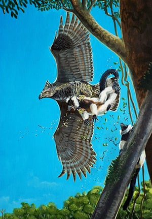 Extinct birds: Malagasy Crowned Eagle