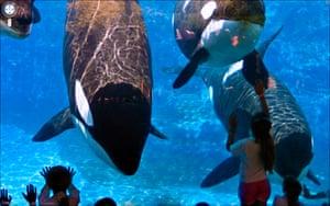 9 eyes google streetview: Seaworld, San Diego, California, United States 2009