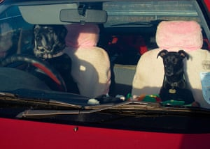 Weekend Readers Pictures: Two dogs in the front seats of a car by John Ellis