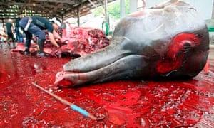 Japan - Whaling Season Begins