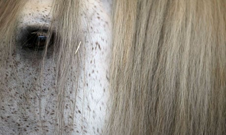 Not just horsing around … psychologists put their faith in equine ...