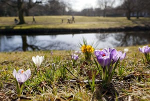 24hours: Blossoming crocuses are seen in Clingendael park in the Netherlands