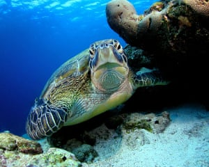Feb 12 Been there comp: turtle in the Maldives