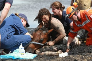 Horse rescue: Horse rescued from thick mud at Avalon Beach in Geelong, Victoria