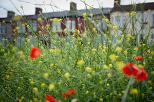 Ciara pathfinders gallery: Wildflowers cover an area of empty land in Liverpool