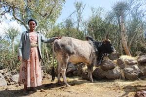 Ethiopia: New seed varieties boost chickpea harvests in Ethiopia