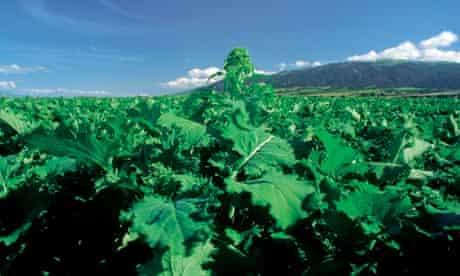 Alys Fowler: Broccoli rabe