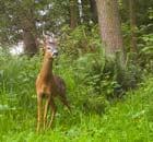 Deer for northerner blog