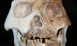 Fossilised skull from a possible new species of human