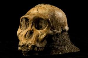 Human evolution: Australopithecus sediba