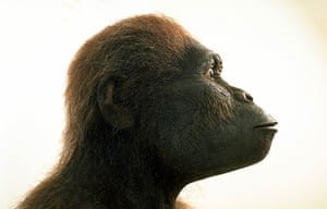 Human evolution: Exhibition on the stages of human evolution