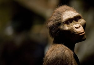"""Human evolution: """"Lucy"""" Exhibit To Open In Houston Amid Protests"""