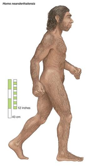 Human evolution: Homo neanderthalensis