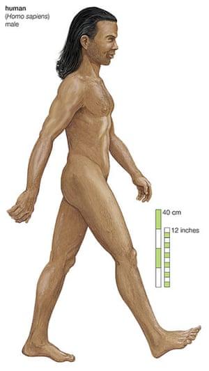 Human evolution: Homo sapiens