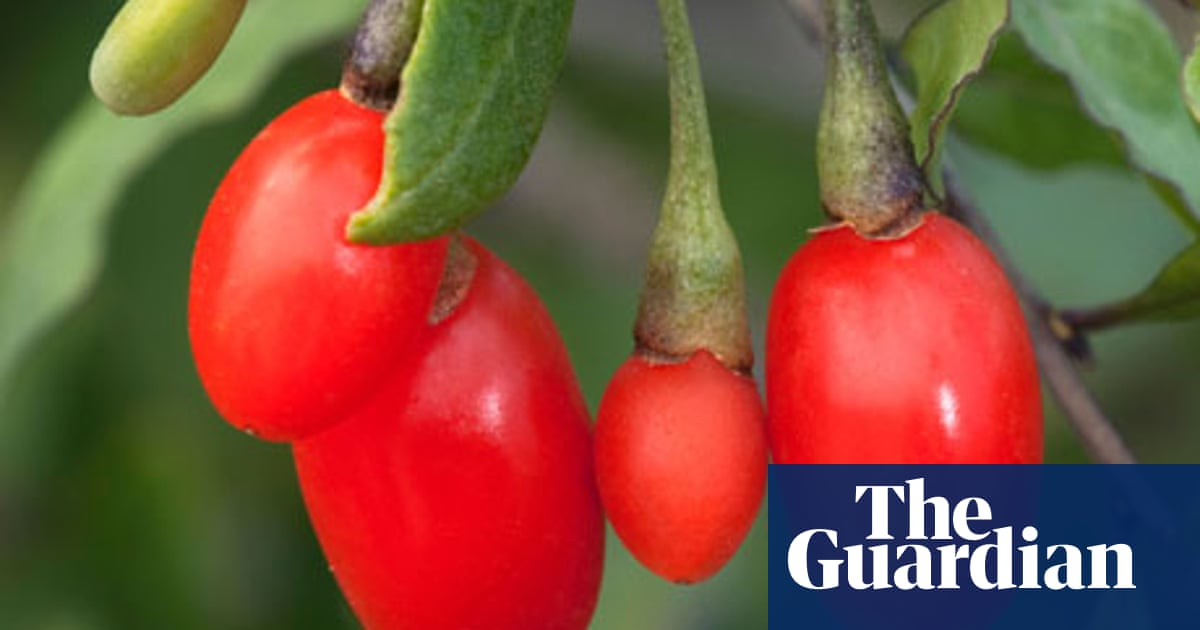 Ask Alys Goji Berries Gardening Advice The Guardian