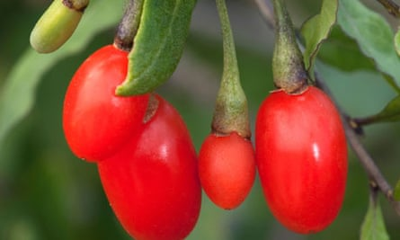 Ask Alys: goji berries - Gardening advice - The Guardian
