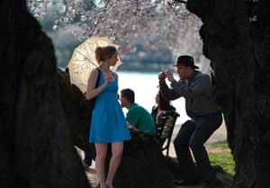 Spring: Cherry blossom in Washington DC