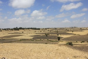 Ethiopia: chickpea farmers