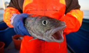 Cod fishing