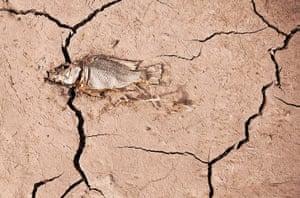World Water Day: Dead fish lies on cracked earth of La Sorrueda