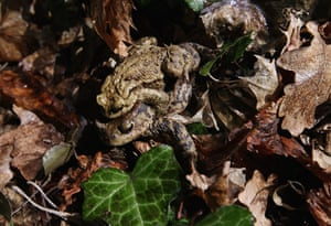 Week in wildlife: Amphibian Migrations Launch In Spring Weather