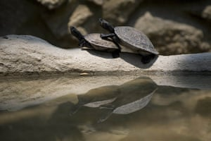 Week in wildlife: Two seized turtles in their cage at the Villa Lorena animal shelter
