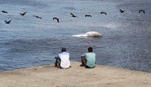 Week in wildlife: Residents look on at a dead Bryde's whale in Rio Brazil