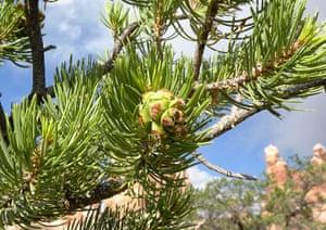Week in wildlife: Plant life study
