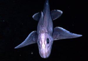 James Cameron:  boneless fish