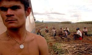 Brazilian labourers on a sugar cane farm