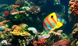 Great Barrier Reef suffering from Australia's decision to allow pesticides