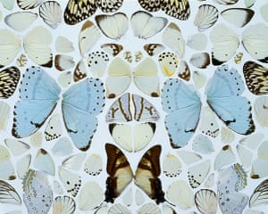 Damien Hirst: Sympathy in White Major - Absolution II  2