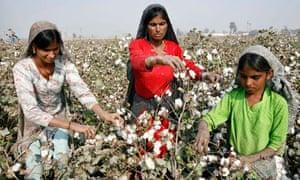 Women work in a cotton field near the city of Multan