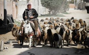 Aleppo, Syria: A farmer drives his flock through the middle of rebel positions