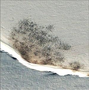 Emperor penguin survey: Emperor colony near at Halley Bay
