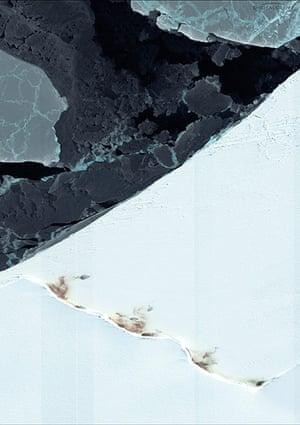 Emperor penguin survey: Halley Bay colony