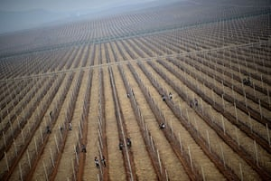 From the agencies: North Korean workers are seen working in an apple farm near Pyongyang
