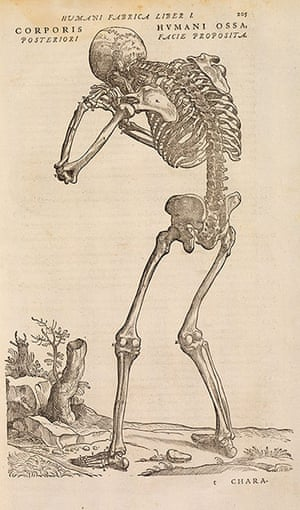 The Royal Society: De humani corporis fabrica