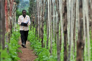 Climbing beans: impact of improved climbing beans in Rwanda