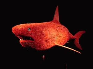 Animal Inside Out: Shark
