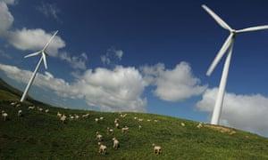 wind turbines with sheep